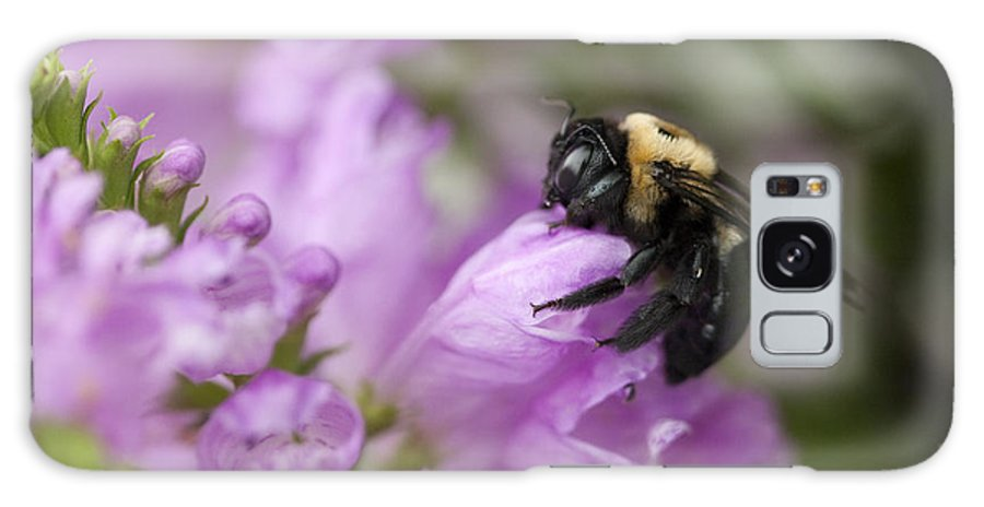 Physostegia Leptophylla Galaxy S8 Case featuring the photograph Bee Hug by Kathy Clark