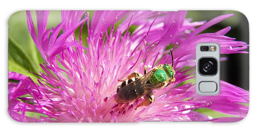 Bee Galaxy S8 Case featuring the photograph Bee On Corn Flower by Corinne Elizabeth Cowherd