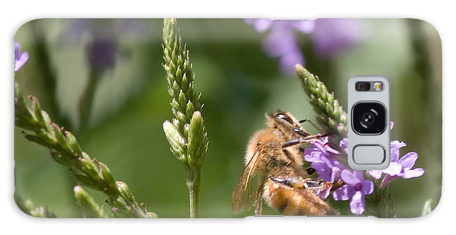 Bee Galaxy S8 Case featuring the photograph Bee On Purple Loosestrife by Optical Playground By MP Ray