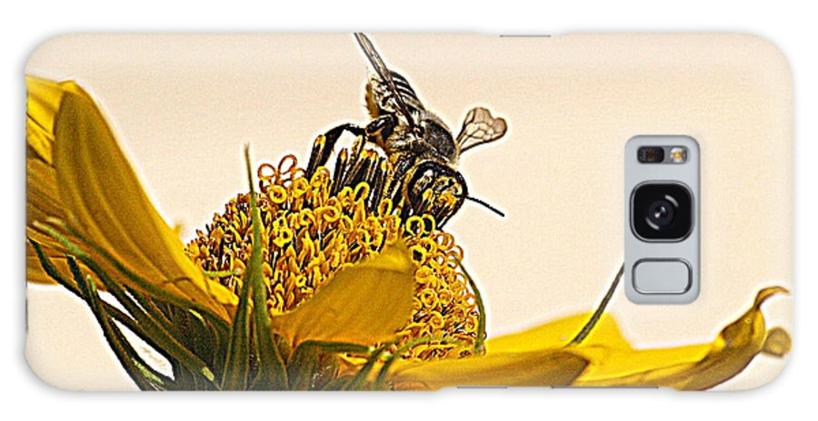 Autumn Galaxy S8 Case featuring the photograph Bee Utiful Day by Kim Loftis