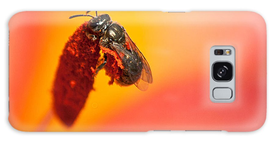 Bee Galaxy S8 Case featuring the photograph Bee's World by Kathryn Whitaker