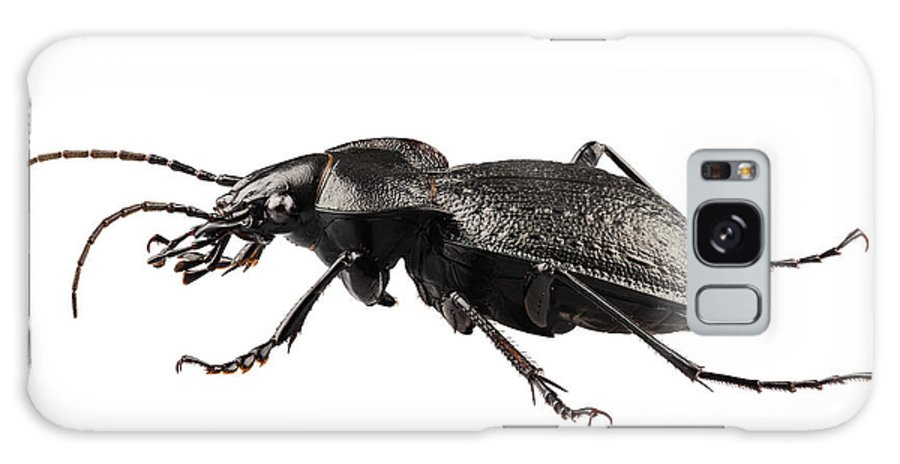 Antenna Galaxy S8 Case featuring the photograph Beetle Species Carabus Coriaceus by Pablo Romero