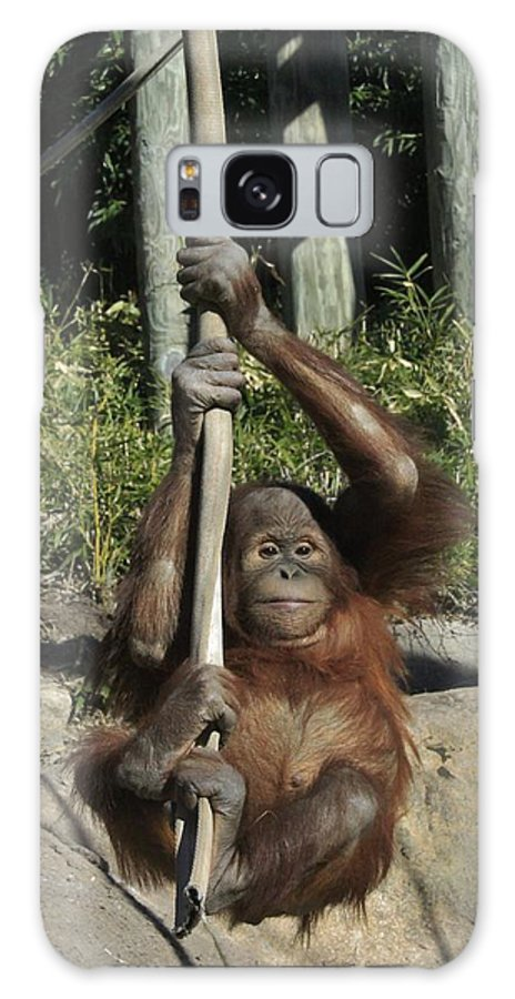 Chimpanzee Galaxy S8 Case featuring the photograph Being A Kid by Crystal Socha