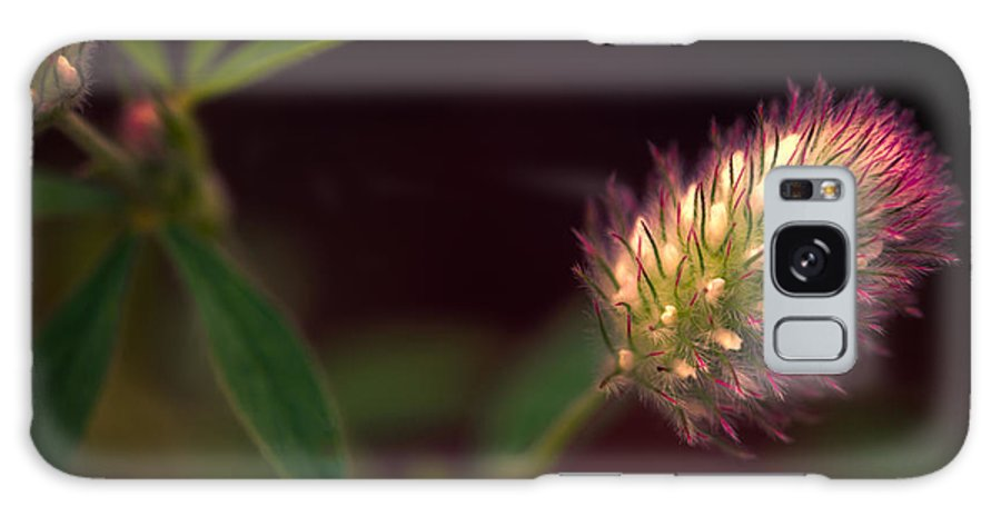 Flower Galaxy S8 Case featuring the photograph Below The Flower Line by Bob Orsillo