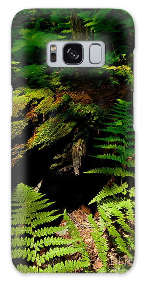 Blue Ridge Mountains Galaxy S8 Case featuring the photograph Beneath The Trees - Blue Ridge Mountains by Dan Carmichael