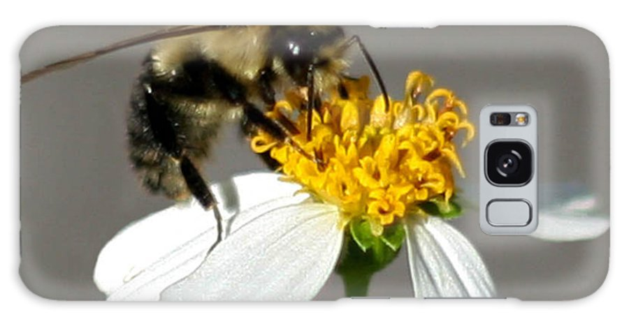 Bee Galaxy S8 Case featuring the photograph Big Bee by Mechala Matthews