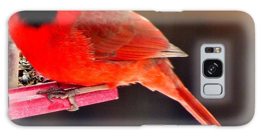 Bird Galaxy Case featuring the photograph Big Boy by Rennae Christman