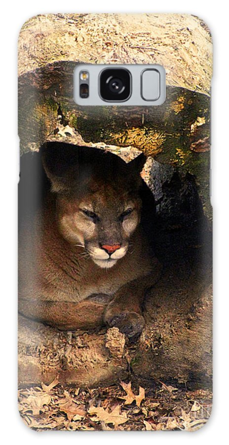 Cougar Cougars Ohio Big Cat Cats Rlclough Zoo Zoos Life Galaxy S8 Case featuring the photograph Big Cats In Ohio. No.16 by RL Clough