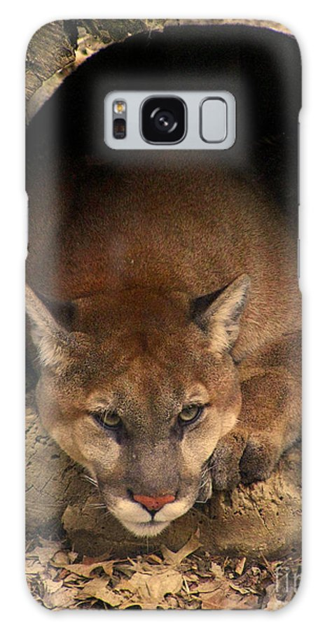 Cougar Cougars Ohio Big Cat Cats Rlclough Zoo Zoos Life Galaxy S8 Case featuring the photograph Big Cats In Ohio. No.17 by RL Clough