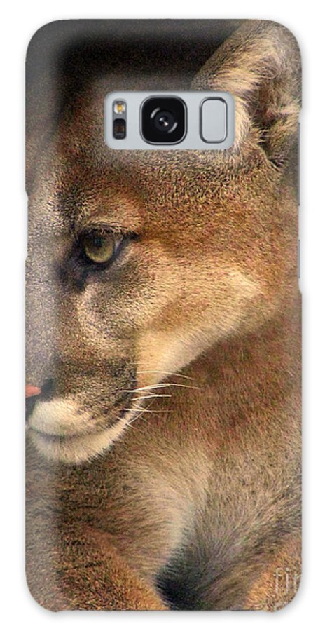 Cougar Cougars Ohio Rlclough Galaxy S8 Case featuring the photograph Big Cats In Ohio. No.20 by RL Clough