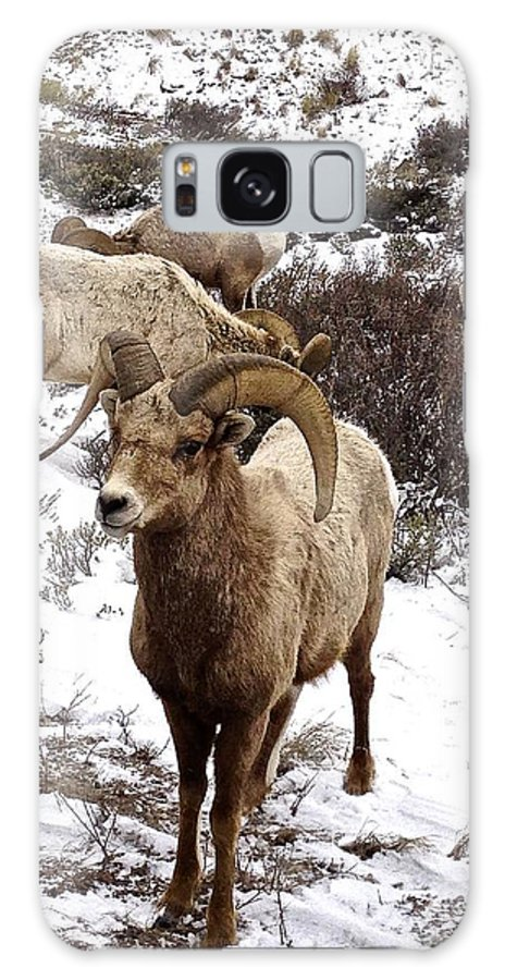 Sheep Galaxy S8 Case featuring the photograph Big Horn Sheep In The Snow by Tisha Clinkenbeard