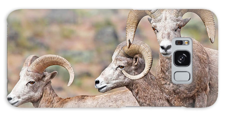 Bighorn Sheep Galaxy S8 Case featuring the photograph Big Horns by Athena Mckinzie