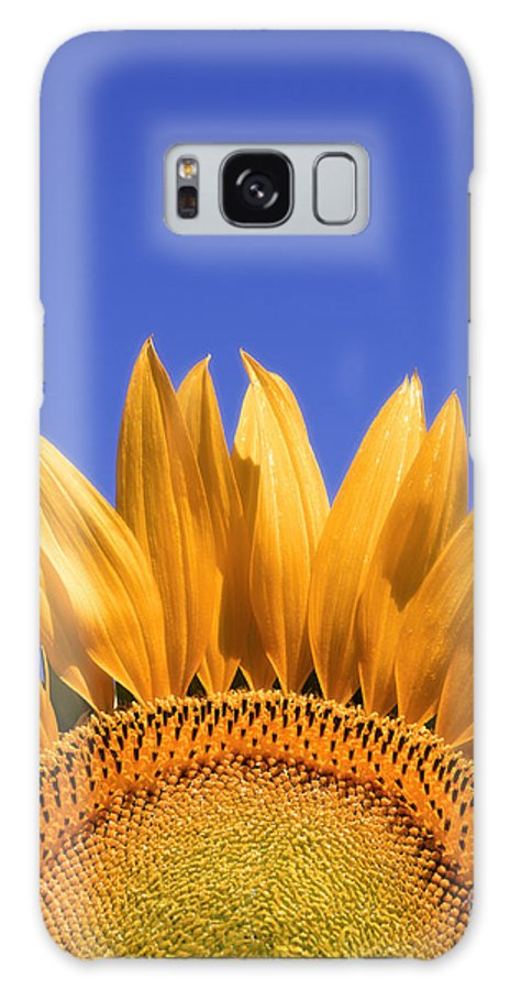 Flora Galaxy S8 Case featuring the photograph Big Yellow by Edmund Nagele