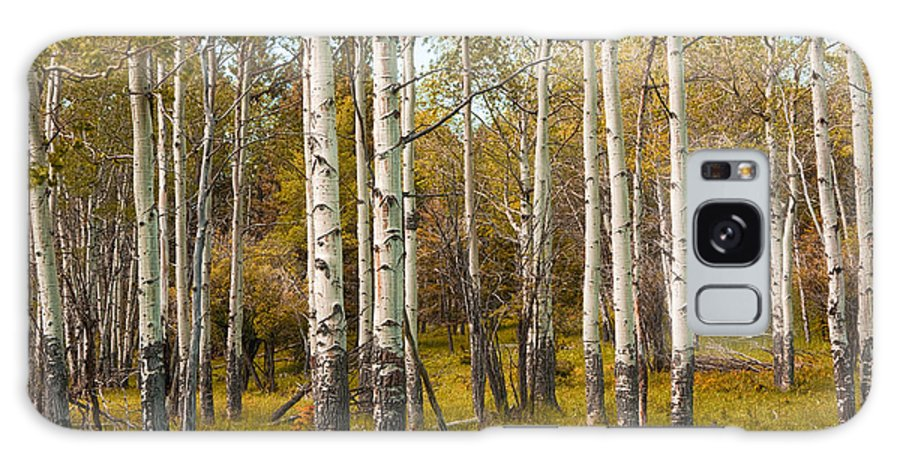 Art Galaxy S8 Case featuring the photograph Birch Tree Grove No. 0126 by Randall Nyhof