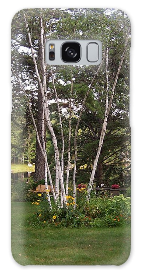 Birch Trees Galaxy S8 Case featuring the photograph Birch Trees by Catherine Gagne