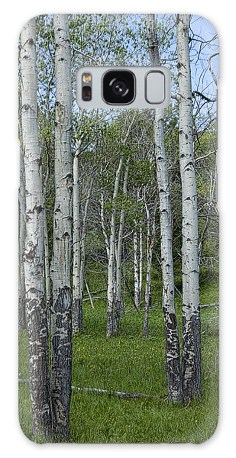 Art Galaxy S8 Case featuring the photograph Birch Trees In A Grove No. 0148 by Randall Nyhof