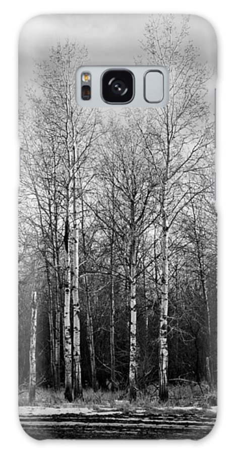Landscape Galaxy S8 Case featuring the photograph Birch Trees by Lindsey Weimer
