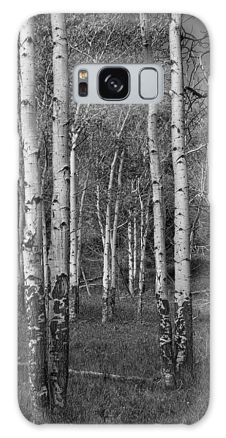 Art Galaxy S8 Case featuring the photograph Birch Trees No.0148 by Randall Nyhof