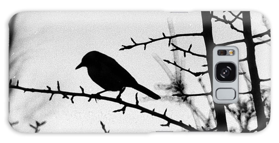 Birds Galaxy S8 Case featuring the photograph Bird In B And W by Karl Rose