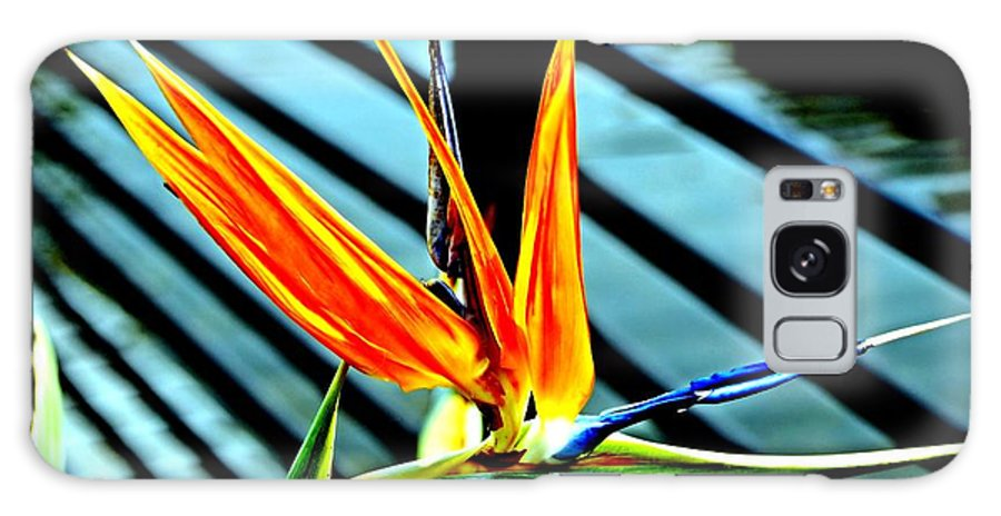 Bird Of Paradise Galaxy S8 Case featuring the photograph Bird Of Paradise by Bob Wall