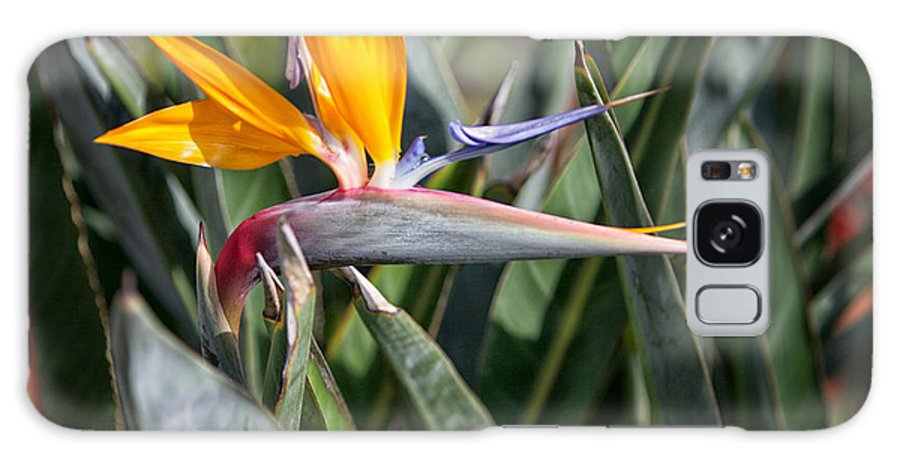 Bird Of Paradise Flower Galaxy S8 Case featuring the photograph Bird Of Paradise by Erika Weber