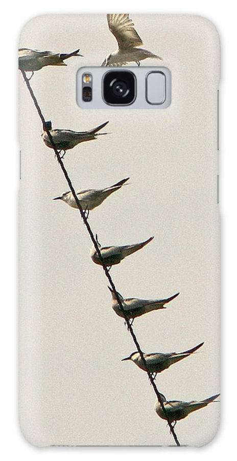 Philippines Galaxy S8 Case featuring the photograph Birds And Wires Four by Pete Marchetto