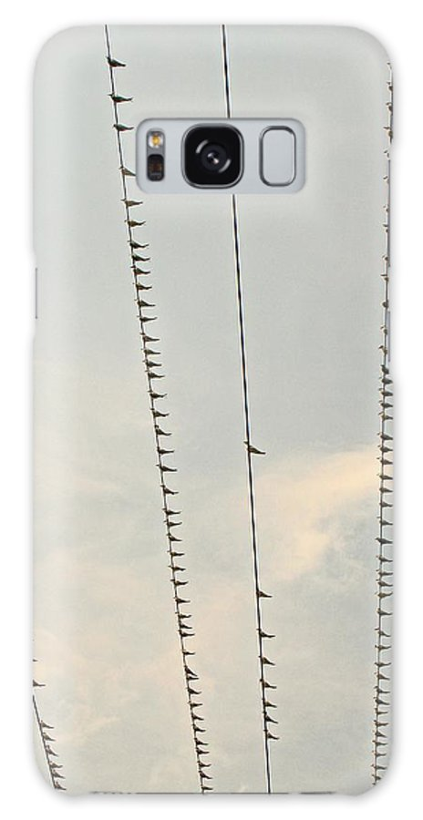 Philippines Galaxy S8 Case featuring the photograph Birds And Wires Two by Pete Marchetto