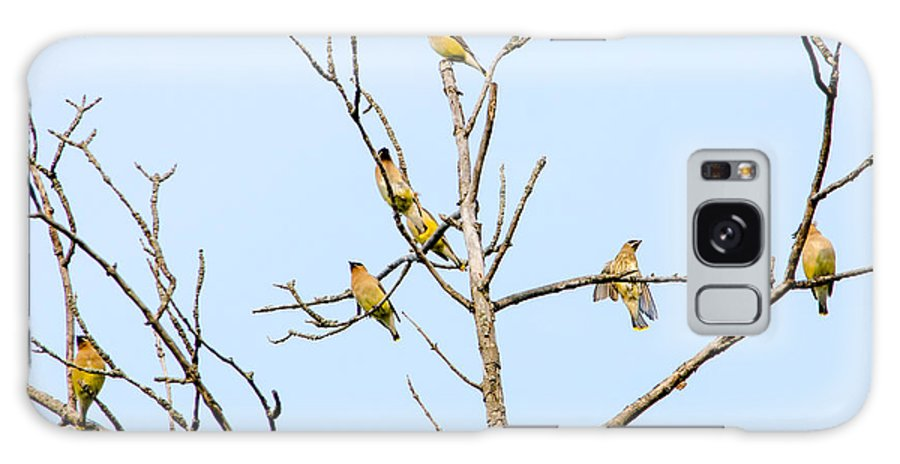Waxwings Galaxy S8 Case featuring the photograph Birds Of A Feather - Waxwings by Susan McMenamin
