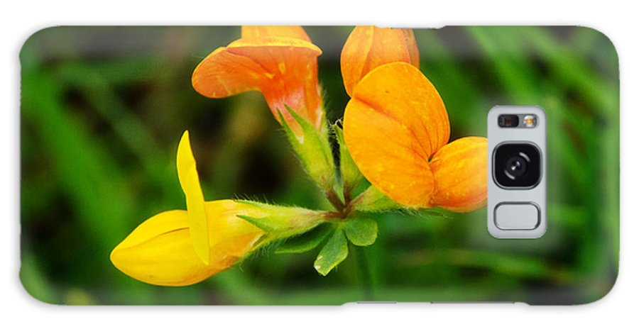Birdsfoot Trefoil Galaxy S8 Case featuring the photograph Birdsfoot Trefoil by Susie Peek