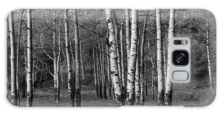 Art Galaxy S8 Case featuring the photograph Black And White Photograph Of A Birch Tree Grove No. 0133 by Randall Nyhof
