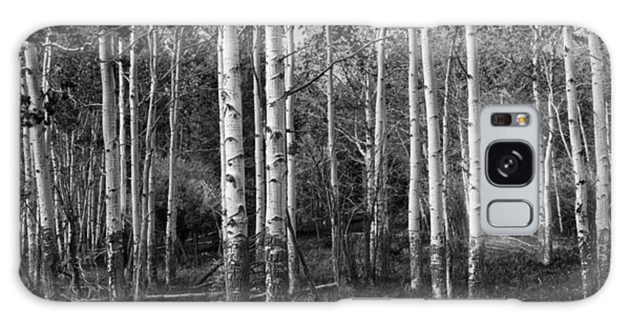 Art Galaxy S8 Case featuring the photograph Black And White Photograph Of Birch Trees No. 0126 by Randall Nyhof