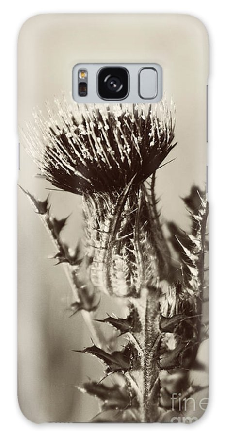 Landscape Galaxy S8 Case featuring the photograph Black And White Thistle by Erin Johnson