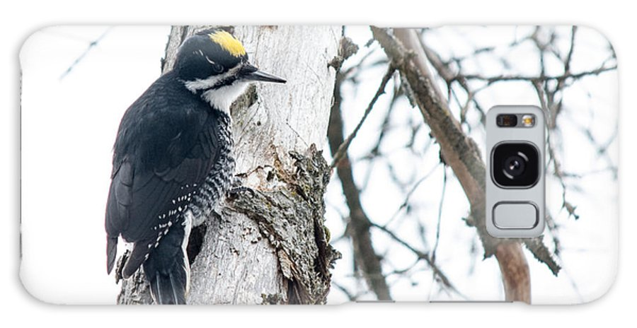 Black-backed Woodpecker Galaxy S8 Case featuring the photograph Black-backed Woodpecker by Cheryl Baxter