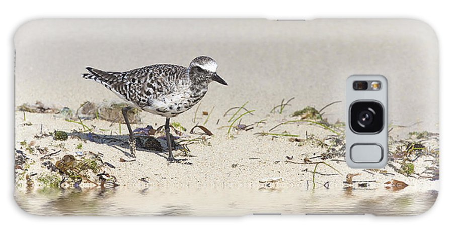 Ron Jones Galaxy S8 Case featuring the photograph Black Bellied Plover by Ron Jones