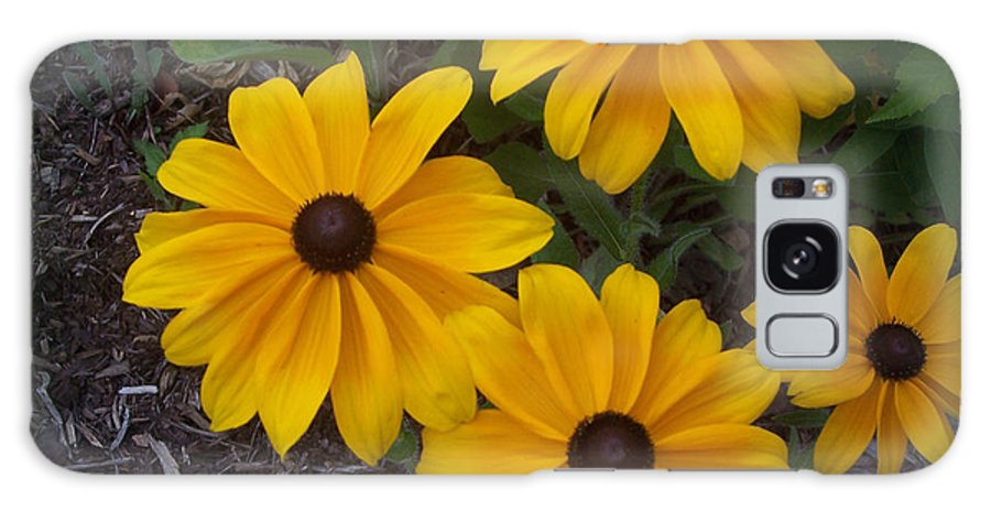 Black-eyed Galaxy S8 Case featuring the photograph Black Eyed Susan by Sandra Clark