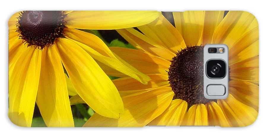 Black Eyed Susan Galaxy Case featuring the photograph Black-eyed Susans Close Up by Suzanne Gaff