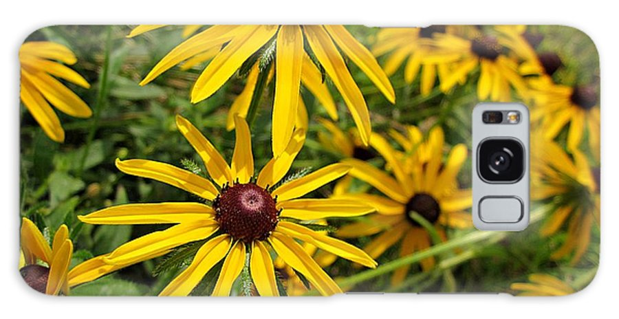 Rudbeckia Galaxy S8 Case featuring the photograph Black-eyed Susans by MTBobbins Photography