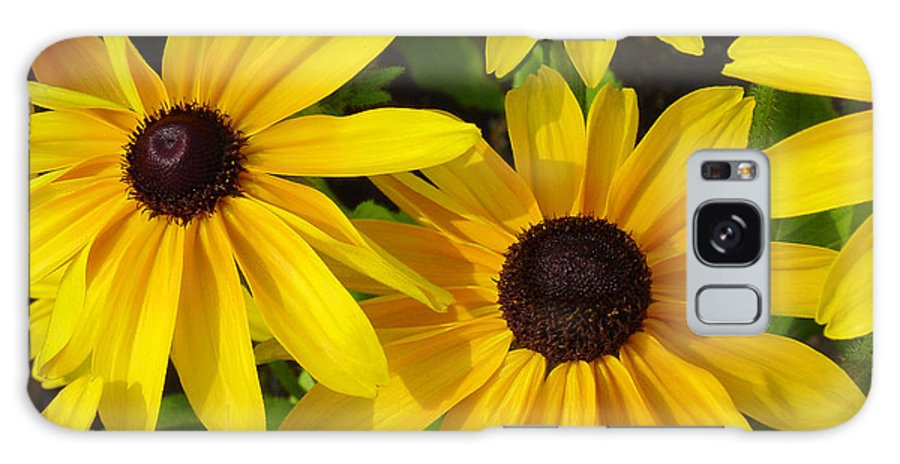 Black Eyed Susan Galaxy S8 Case featuring the photograph Black Eyed Susans by Suzanne Gaff