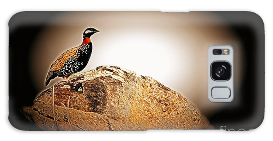 Black Francolin Galaxy S8 Case featuring the photograph Black Francolin by Jim Cazel