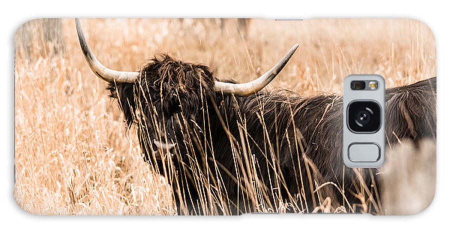 Galaxy S8 Case featuring the photograph Black Highland Cow by Cheryl Baxter