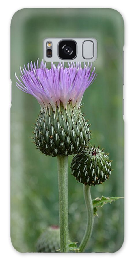 Thistle Galaxy S8 Case featuring the photograph Black Hills Thistle by William Hallett