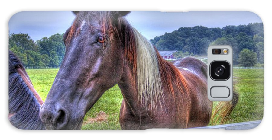 Horse Galaxy S8 Case featuring the photograph Black Horse At A Fence by Jonny D
