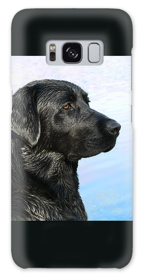 Labrador Retriever Galaxy S8 Case featuring the photograph Black Labrador Retriever After The Swim by Jennie Marie Schell