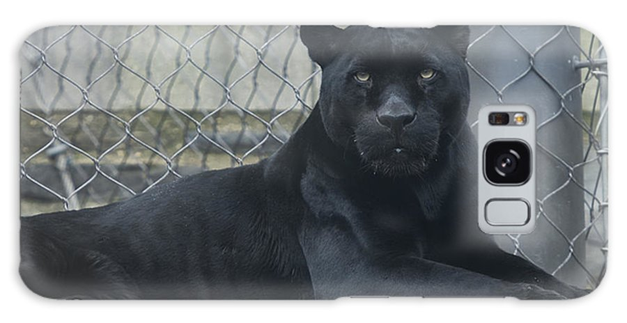 Black Leopard Galaxy S8 Case featuring the photograph Black Leopard by Phil Abrams