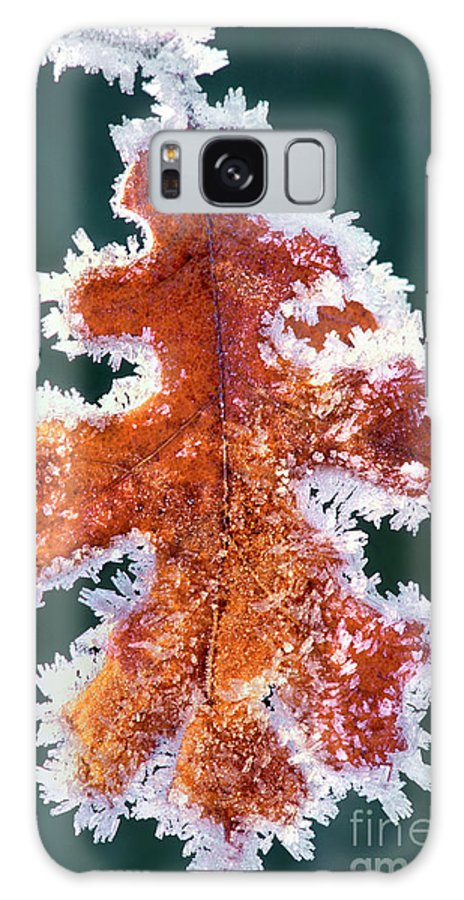 North America Galaxy S8 Case featuring the photograph Black Oak Leaf Rime Ice Yosemite National Park California by Dave Welling