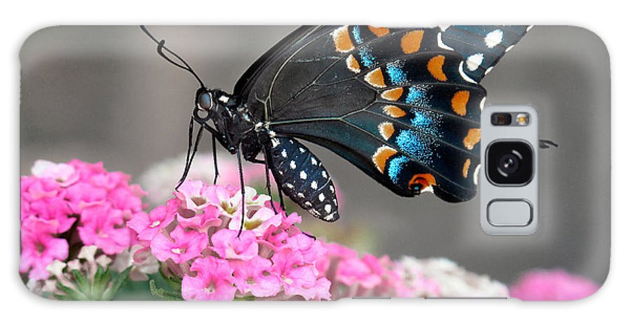 Butterfly Galaxy S8 Case featuring the photograph Black Swallowtail Butterfly by David and Carol Kelly