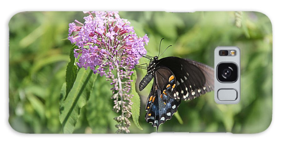 Sooc Galaxy S8 Case featuring the photograph Black Swallowtail by Ericamaxine Price