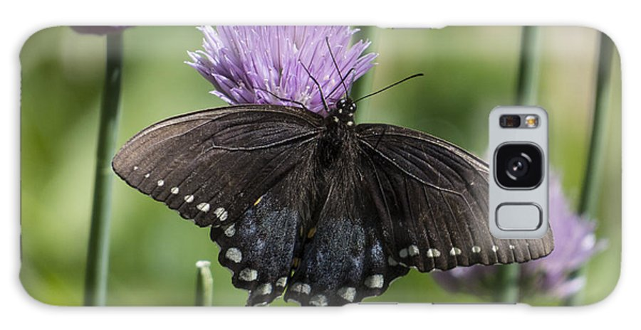 Nature Galaxy S8 Case featuring the photograph Black Swallowtail On Chives by Lili Feinstein