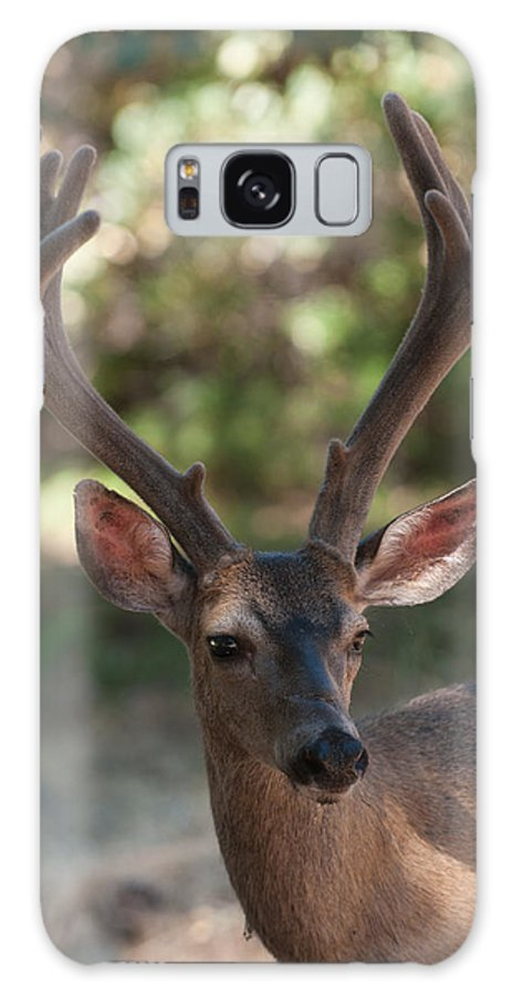 Animal Galaxy S8 Case featuring the photograph Blacktailed Buck by Jeffrey Banke