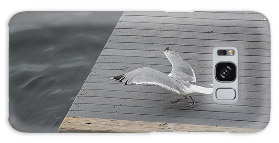 Sea Gull Galaxy S8 Case featuring the photograph Blending In by Ruth H Curtis
